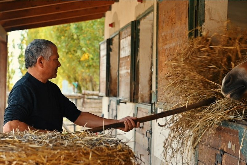 pensione-per-cavalli-1